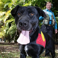 Introducing Migaloo, the world's first canine archeologist | Archaeology News | Scoop.it