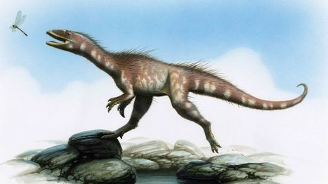 BBC NEWS: Name for dinosaur found on Vale of Glamorgan beach - | University of Manchester in the news | Scoop.it