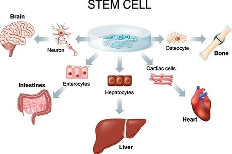 The Healing Power Of Stem Cells | Adult Stem Cells SAVES Lives! | Scoop.it
