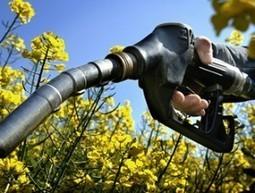 Les aides à la production des biocarburants | Questions de développement ... | Scoop.it