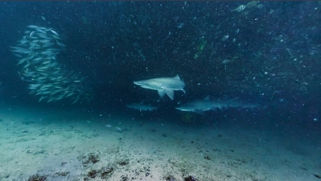 Google Launches Underwater Street View | Hard working instead of working hard | Scoop.it