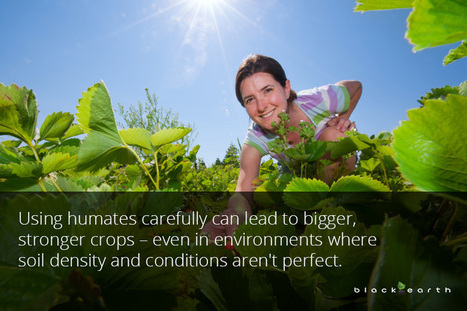 What are the Biggest Agricultural Benefits of Humic Material? | Crop yield | Scoop.it