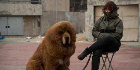 Dog Sells For Nearly $2 Million In China | Real Estate Plus+ Daily News | Scoop.it