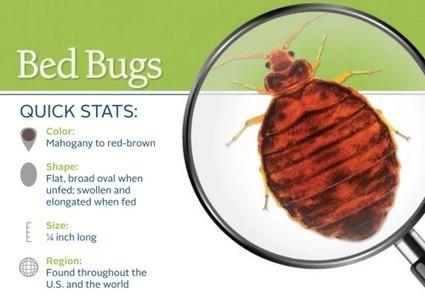 Bed Bugs Northern Virginia | Paleo Diet Recipes | Scoop.it