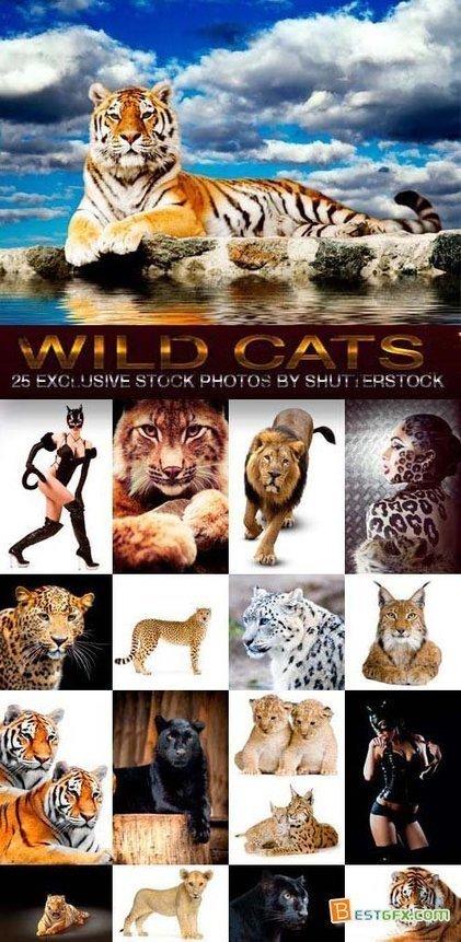 Wild Cats 25xJPG | DesignFeed | Scoop.it