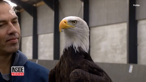 Eagles Trained To Take Down Drones In Mid Flight | Total Knowledge | Scoop.it