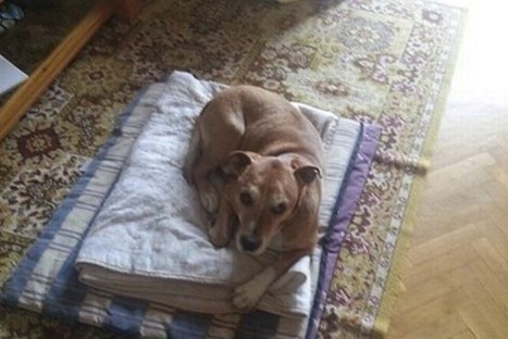 Spanish Ebola Patient's Dog Is Put to Death - Wall Street Journal   CLOVER ENTERPRISES ''THE ENTERTAINMENT OF CHOICE''   Scoop.it