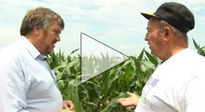 Why genetically engineered food is dangerous: New report by genetic engineers | GMOs | Scoop.it