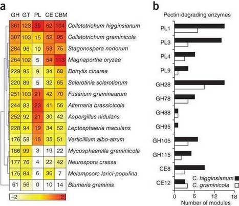 Lifestyle transitions in plant pathogenic Colletotrichum fungi deciphered by genome and transcriptome analyses : Nature Genetics : Nature Publishing Group | Plant Genomics | Scoop.it