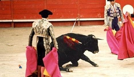 Corrida : les taureaux sont aussi torturés en coulisses | Chronique d'un pays où il ne se passe rien... ou presque ! | Scoop.it