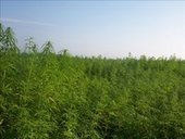Colorado Hemp Farming Regulations Unveiled - KREX News Channel 5 | Local Economy in Action | Scoop.it