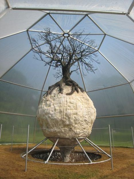 Peter De Cupere: Peppertreeduplicateballs PTDB-Tree Virus | Art Installations, Sculpture | Scoop.it