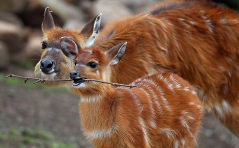 The Cutest Baby Animals You Will Ever See - AWW Times 25! | crazy news articles | Scoop.it