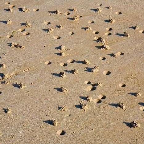 Lugworms ingest tiny plastic balls abundant in our oceans, threaten biodiversity | Amocean OceanScoops | Scoop.it