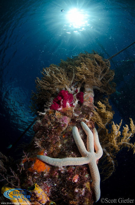 Top 5 Settings To Improve Your Underwater Photography | Indigo Scuba | Scoop.it