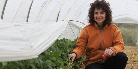 Dordogne : les premières fraises attendues d'ici 15 jours | Agriculture en Dordogne | Scoop.it