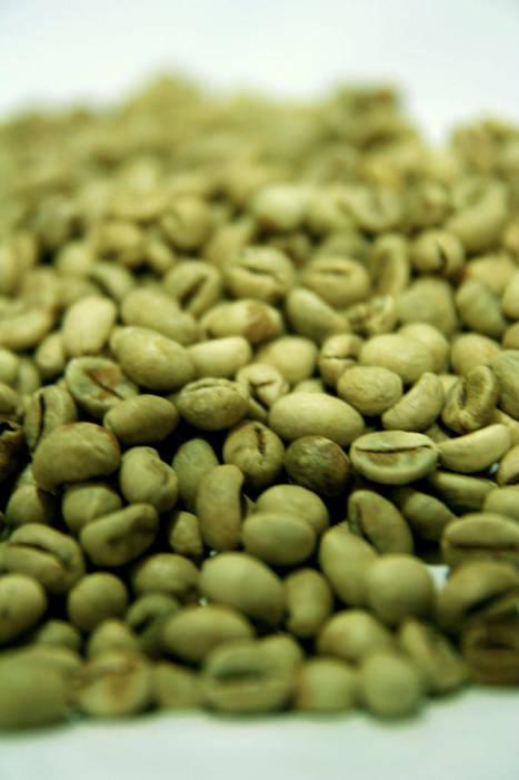 groene koffie de geneeskrachtige capaciteiten en afslankende werking | grafischevormgeving | Scoop.it