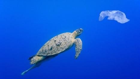 Allarme scienziati: dal 2050 negli oceani più bottiglie di plastica che pesci | Il mondo che vorrei | Scoop.it