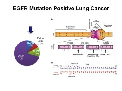 Dr. Natasha Leighl's Highlights in Lung Cancer, 2012, Parts 1 and 2: New Options for Patients with EGFR Mutations, ALK and ROS1 Rearrangements «  LUNGevity Foundation Expert Blog | LungCancer | Scoop.it