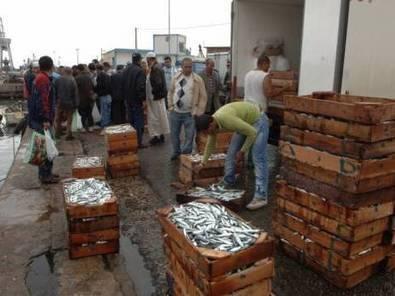 Sid Ahmed Ferroukhi : « En 2020, l'aquaculture représentera 70 % du marché algérien du poisson » - Economie - El Watan | AQUACULTURE IN MEXICO AND WORLD | Scoop.it