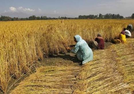 Poor nations need support to cut emissions from farming - experts | Sustain Our Earth | Scoop.it