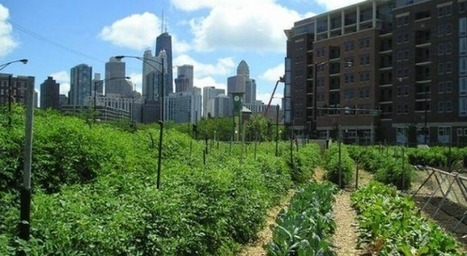 Urban Agriculture - A Growing Phenomenon - Construction Digital | Agriculture and Climate Change | Scoop.it