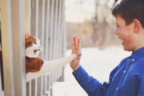 Expressions en français avec le chat | FLE | Scoop.it
