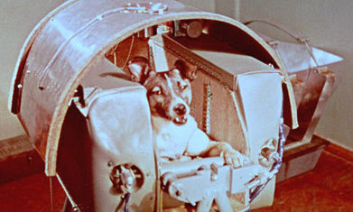 Animal Astronauts: The Unsung Heroes of Space Exploration | Unknown Knowledge | Scoop.it
