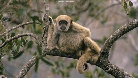 ARKive - Discover the world's most endangered species | Adaptations for survival | Scoop.it