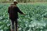 Pesticides : l'épidémie silencieuse des agriculteurs brésiliens - Agriculture - Rio+20 - écologie et environnement | pesticides : un vrai cancer social ? | Scoop.it