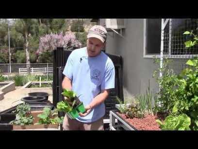 Aquaponic Gardens With Jeff Kite - Sunland Water Gardens   Pond Talk   Scoop.it