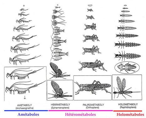 5 - Un TP, un article: La Croisière ça Mue | EntomoScience | Scoop.it