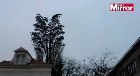 Mira con cuidado… No podrás creer lo que este hombre capturó en video ¡Ese no es un árbol normal! | Agua | Scoop.it