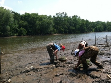 """Restoring the Anacostia, """"America's Forgotten River,"""" One Plant at a Time - National Geographic   Fish Habitat   Scoop.it"""