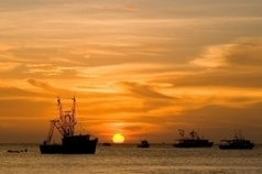 #Ecosystems and Community News: #OceanGrabbing threatens the #food security of entire communities | Rescue our Ocean's & it's species from Man's Pollution! | Scoop.it