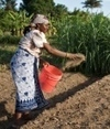 Farmers dig into soil quality - Nature.com | Sustainability in modern agriculture | Scoop.it