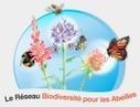 Mois par mois, exemples de floraisons importantes pour l'abeille domestique | apiculture | Scoop.it