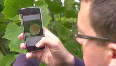 Shazam for Plants Will Identify Any Plant From a Picture | Ayahuasca  アヤワスカ | Scoop.it