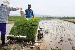[Eng] La plantation du riz avec du compost pour améliorer les sols endommagés par le tsunami commence à Miyagi | The Mainichi Daily News | Japon : séisme, tsunami & conséquences | Scoop.it