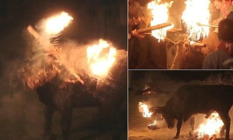 Terrified bull is caked in mud and has lit fireworks tied to its horns | spanish news in english | Scoop.it