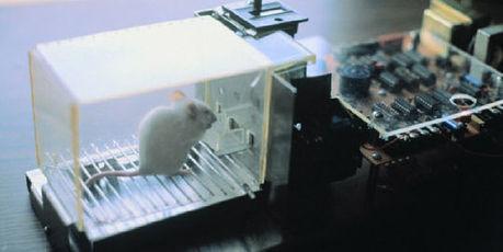 Une étude conclut aux effets biologiques des ondes électromagnétiques | Sciences & Technology | Scoop.it