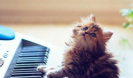 Regarder des vidéos de chats, c'est bon pour la santé! | Food for Pets | Scoop.it
