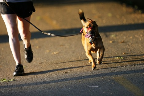 Tips for running with dogs   Health & Fitness   Scoop.it