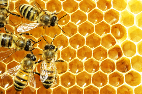 Bees are dying off — but there's a surprisingly simple, completely uncontroversial way to save them | this curious life | Scoop.it