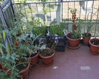 Urban Gardening In Apartments – How To Grow A Garden In An Apartment | Gardening planning | Scoop.it