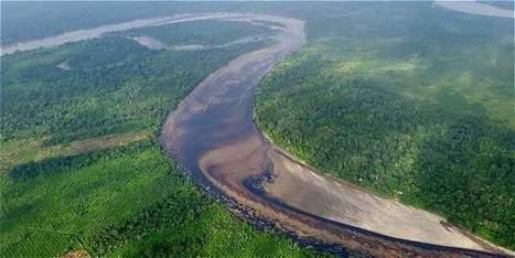'El de Tumaco es quizá el daño ambiental más grave en la historia' - Gobierno - El Tiempo   nancyperave   Scoop.it