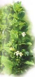 Nature et santé : Plantes contre l'anxiété | Méli-mélo de Melodie68 | Scoop.it
