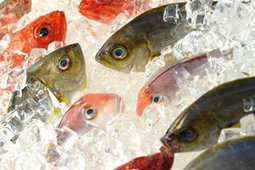 11 Best Fish: High in Omega-3   All I Need....   Scoop.it