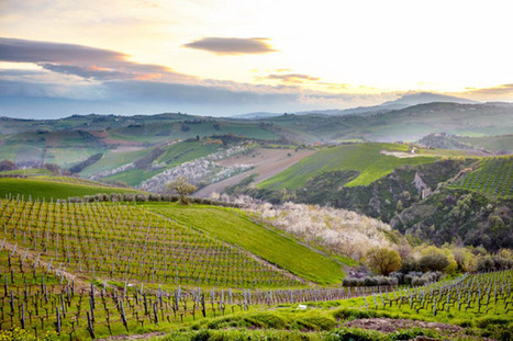 Le Marche is a real Wine Travel Destination | Le Marche another Italy | Scoop.it