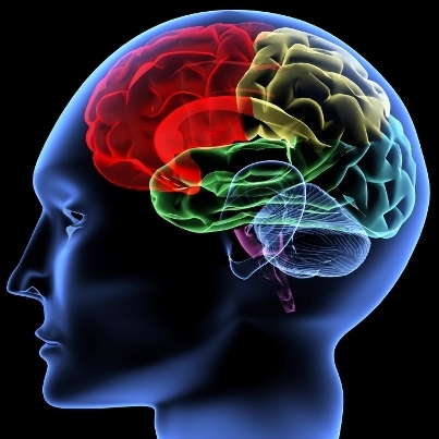 Por qué la neurociencia es prioritaria | Managing Technology and Talent for Learning & Innovation | Scoop.it
